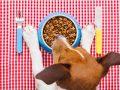 Comida para perros: ¿Cuál es el mejor producto del 2020?