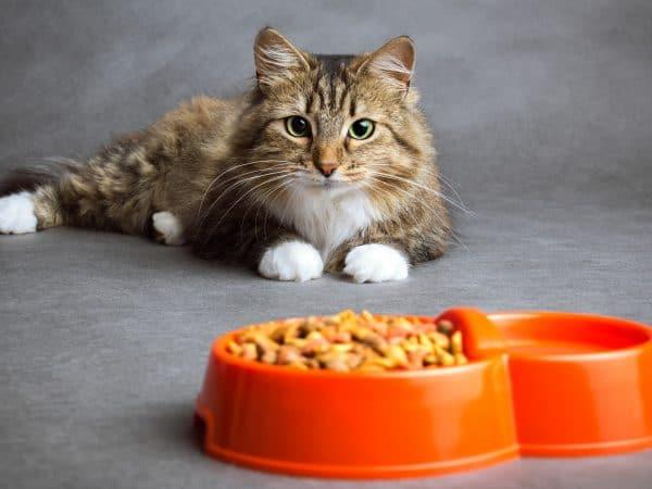 Comida para Gatos: ¿Cuáles son las mejores del 2020?