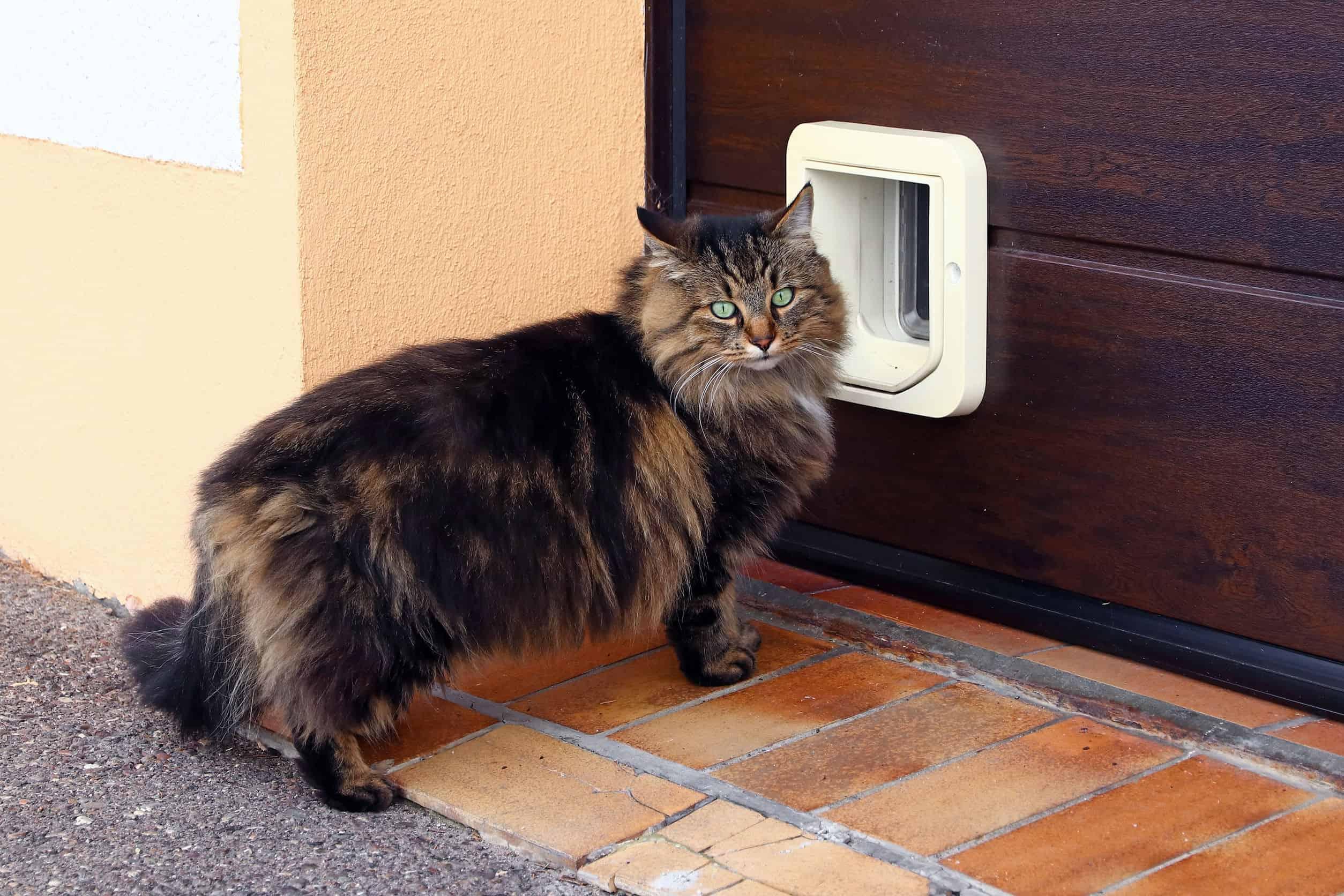 Puerta para gatos: ¿Cuál es la mejor del 2020?
