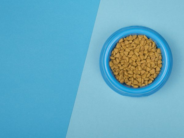 Round Blue food bowl with cat kibble seen from a high angle view on a background of two colors of blue with copy space