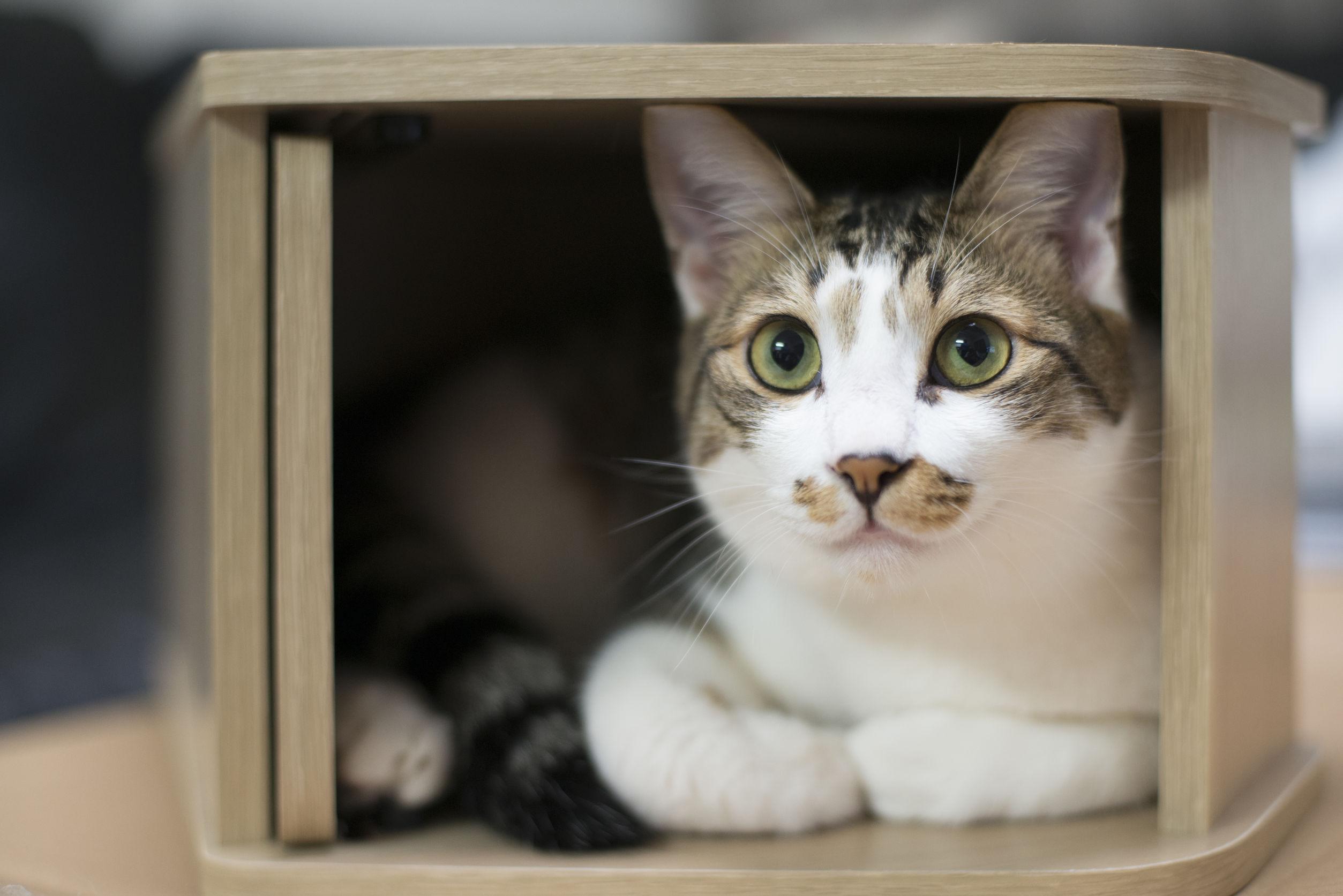 Casa para gatos: ¿Cuál es la mejor del 2020?