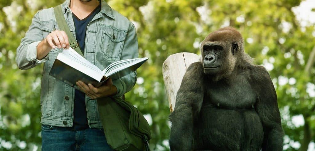 Um gorila ao lado de uma pessoa que segura um livro aberto.