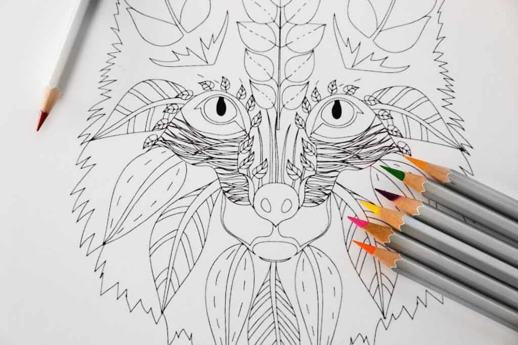 Foto que mostra um desenho de uma rapousa em um livro de colorir com os lápis de cor ao lado.